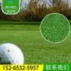 晟林人造草坪厂家直销 优质门球场高尔夫球场专用人造草坪